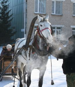 Horse and Sleigh