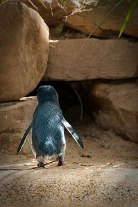Penguin Bed